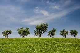 subsidieoproep klimaat en gezondheid