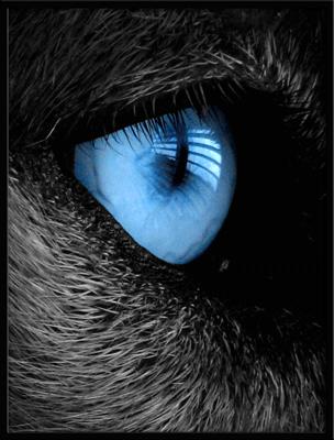 Virbac oogproducten
